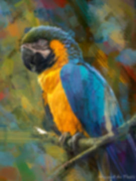 Bird painting printed on canvas - BLUE-AND-GOLD MACAW