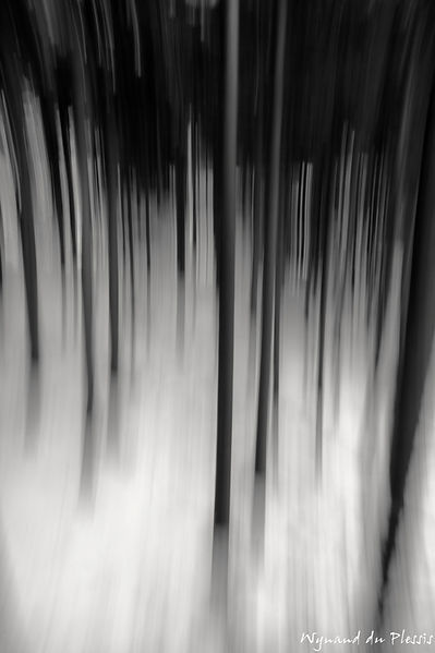 Luxury Fine Art Prints - FOREST BLUR WITH SNOW