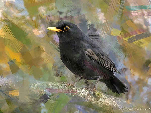 Bird photo to bird art printed on canvas - BLACKBIRD