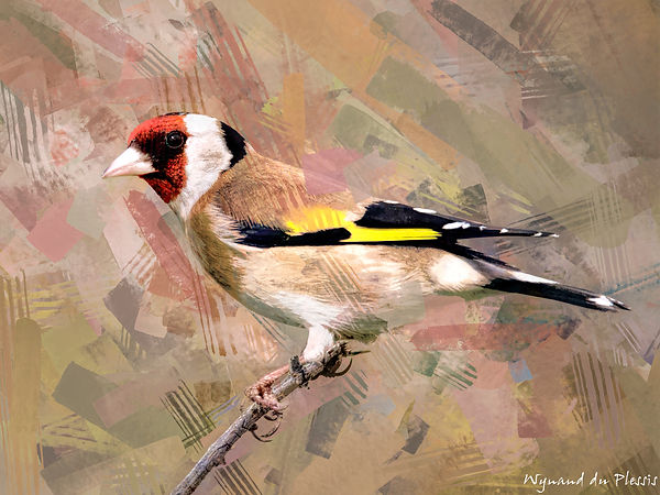 Bird Photo Art - European goldfinch - fine art prints on the Art Print Media of your choice