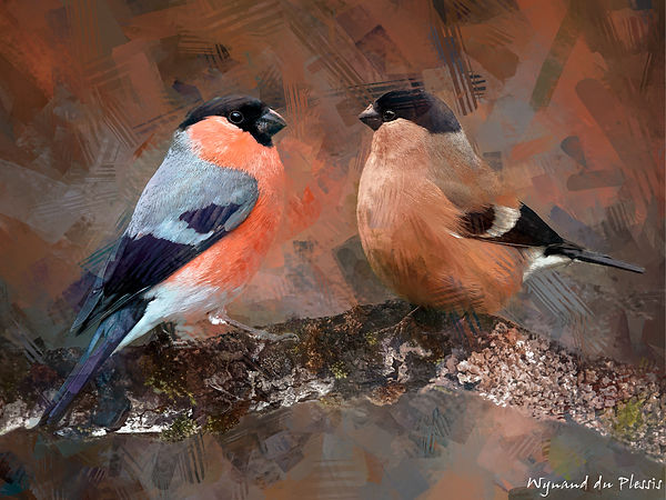 Bird painting canvas print - EURASIAN BULLFINCH