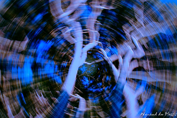 Luxury Fine Art Prints - TWIST & TURN