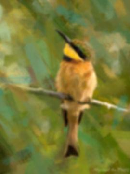 Bird photo to bird art printed on canvas - LITTLE BEE-EATER