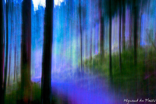 Luxury Fine Art Prints - FOREST AT NIGHT