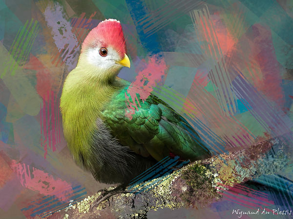 Bird Photo Art - Red-crested turaco - fine art prints on the Art Print Media of your choice