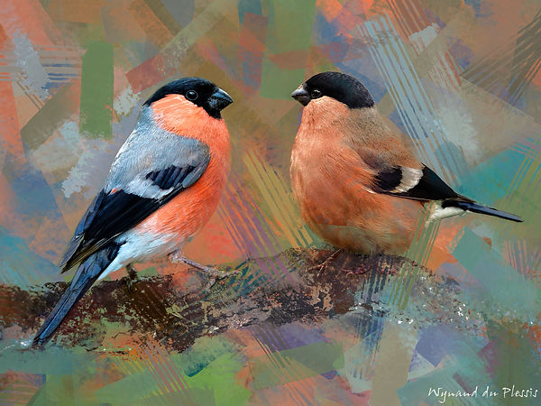 Bird Photo Art - Eurasian bullfinch - fine art prints on the Art Print Media of your choice