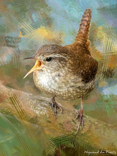 Bird Photo Art - Eurasian wren - fine art prints on the Art Print Media of your choice