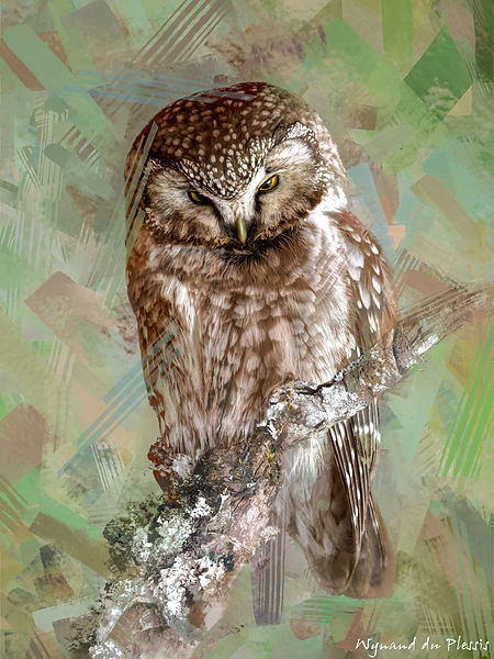 Bird Photo Art - Boreal owl - fine art prints on the Art Print Media of your choice