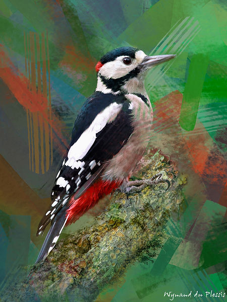 Bird painting printed on canvas - GREAT SPOTTED WOODPECKER