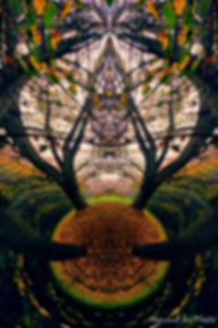 Luxury Fine Art Prints - BEWITCHED FOREST-2
