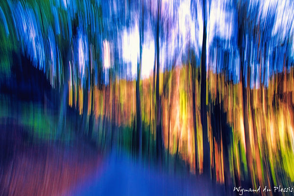 Luxury Fine Art Prints - FOREST GLOW - 2