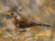 Bird painting printed on canvas - FIELDFARE