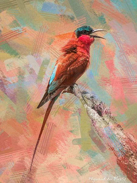 Bird Photo Art - Carmine bee-eater - fine art prints on the Art Print Media of your choice