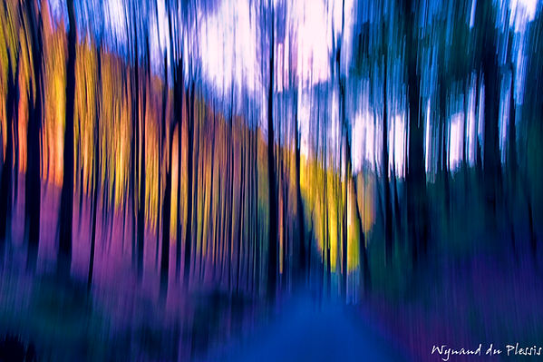 Luxury Fine Art Prints - FOREST GLOW