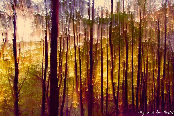 Luxury Fine Art Prints - MORNING RADIANCE