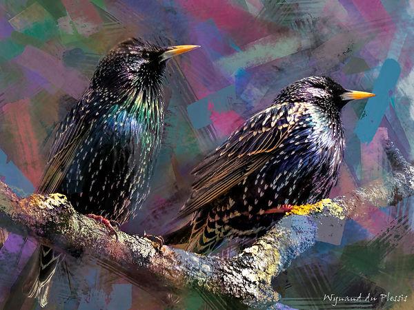 Bird Photo Art - European starling - fine art prints on the Art Print Media of your choice