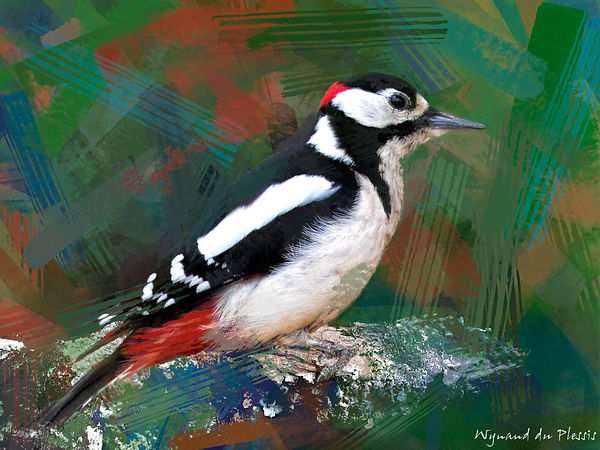 Bird Photo Art - Great-spotted woodpecker - fine art prints on the Art Print Media of your choice