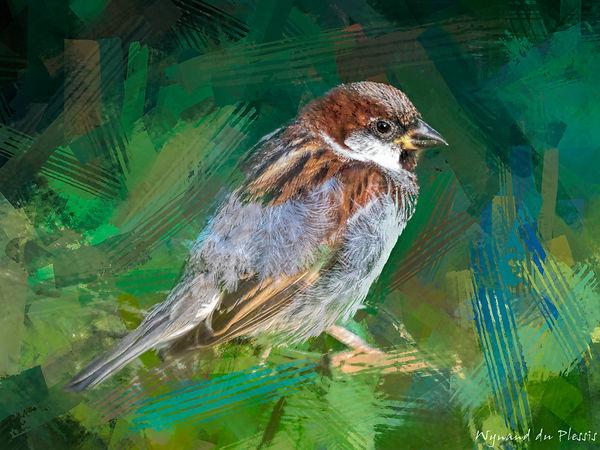 Bird Photo Art - House sparrow - fine art prints on the Art Print Media of your choice