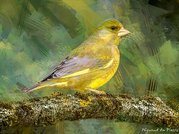 Bird painting canvas print - EUROPEAN GREENFINCH