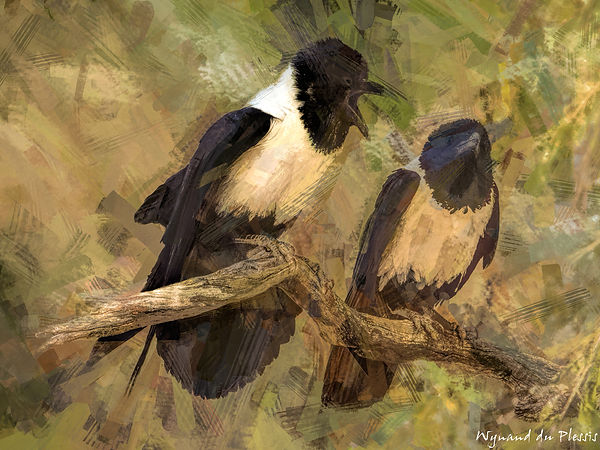 Bird painting canvas print - PIED CROWS
