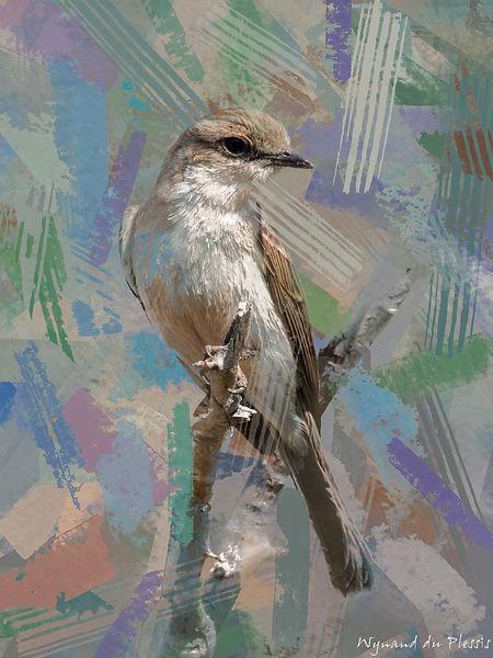 Bird Photo Art - Marico flycatcher - fine art prints on the Art Print Media of your choice
