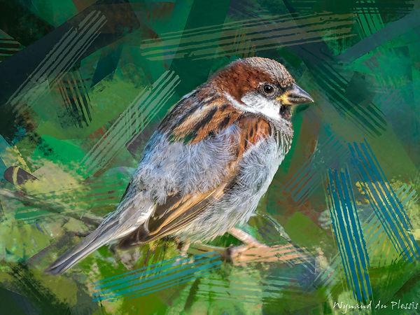 Bird photo to bird art printed on canvas - HOUSE SPARROW male