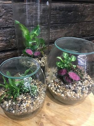 Terrariums ($55, $77 & $110 shown in image)