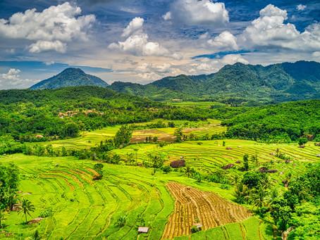 Кілька слів про регіони. Кава з Індонезії