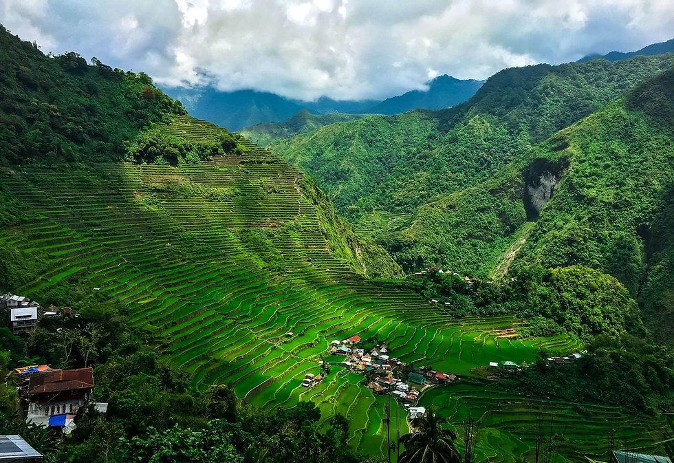 Finca coffee, фермерська кава зі всього світу