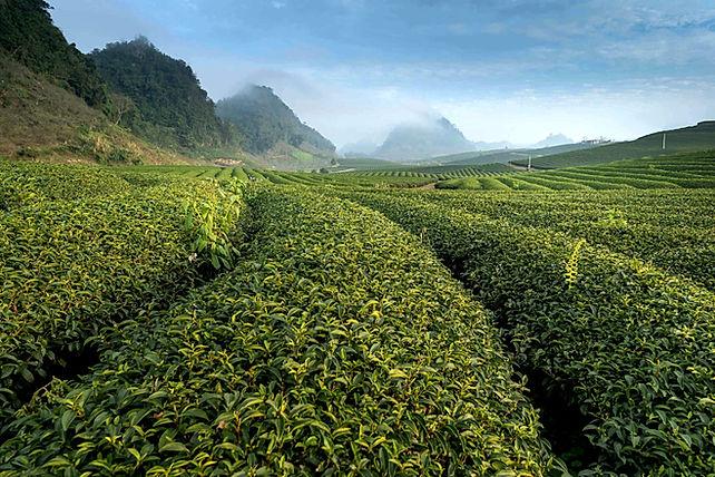 Finca coffee, завітайте до нас на капінг, фермерська кава