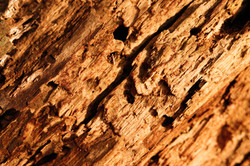 Textures of wood
