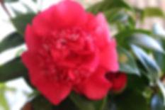 newflower_1.jpg