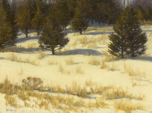Winter Cedars