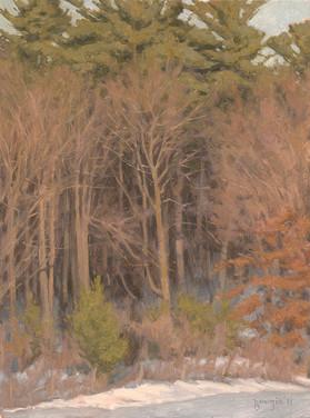Hermitage Woods
