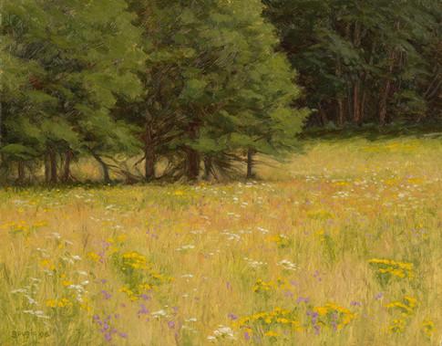 Summer Prairie
