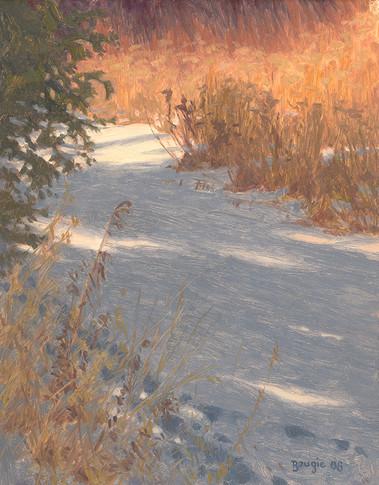 Winter Goldenrod