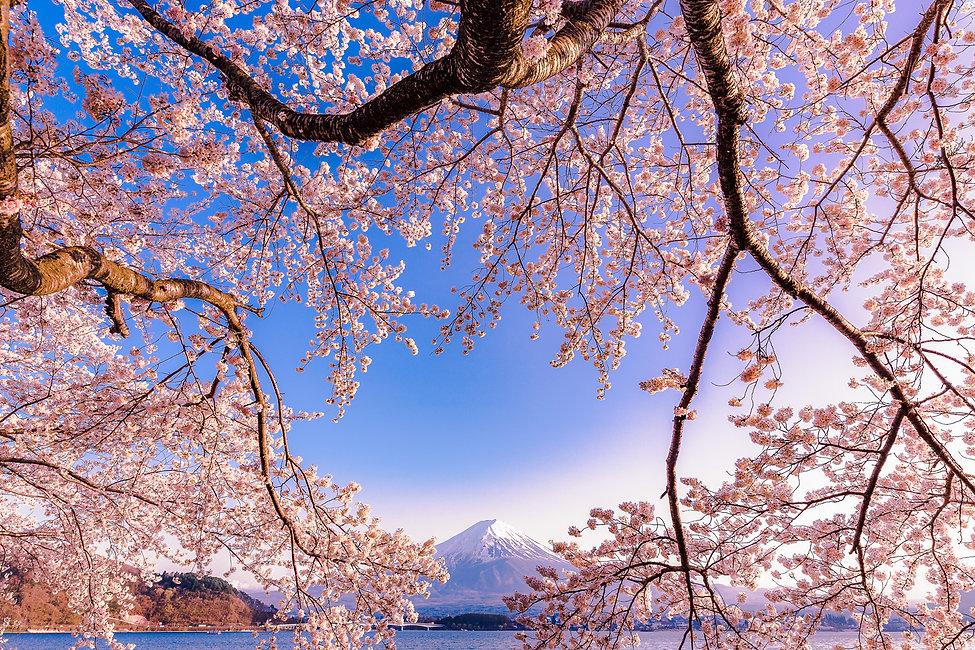 THKawaguchiko_Experience_Photo_160415_00