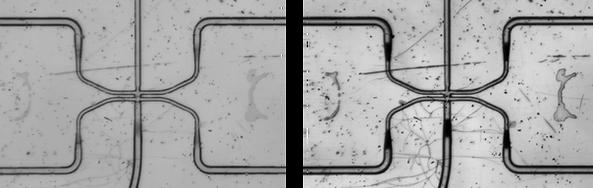 high phase contrast microfluidics microscopy, microchannels