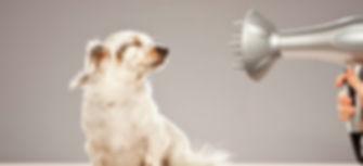 dog-grooming-mistakes-1.jpg