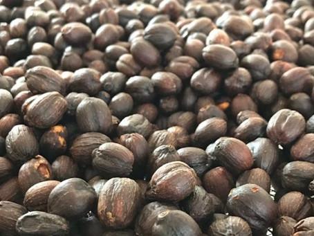 A importância da seca no café