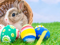 The Easter Bunny, a Broken Heart and a New Appreciation...