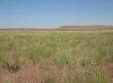 dryland.jpg