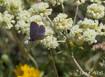 Register Now - Heritage Garden Spring Webinar