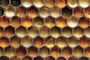 polline_04.jpg