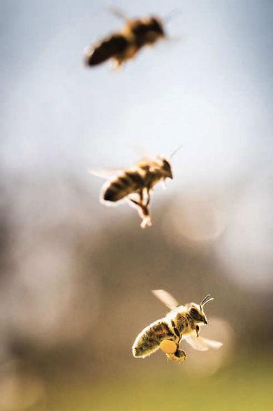 polline_03.jpg