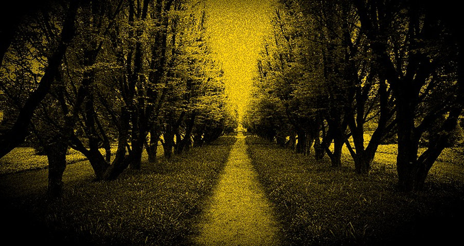 Tree%20Lined%20Path_edited.jpg