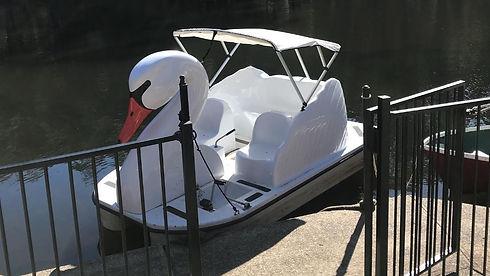 swan-pedal-boat-lane-cove-river-sydney1.