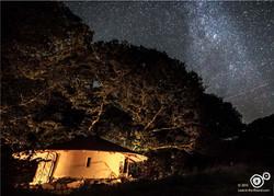 Shooting stars to wish upon...