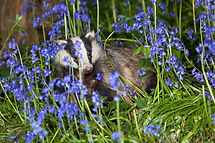 Wildlife holidays Cornwall, Luxury couples holiday, Romantic break for two in Cornwall, Couples only breaks Cornwall, Sexy weekend away Cornwall, Naturist holidays, Artists Retreat, Cornwall wildlife, Luxury break for 2,