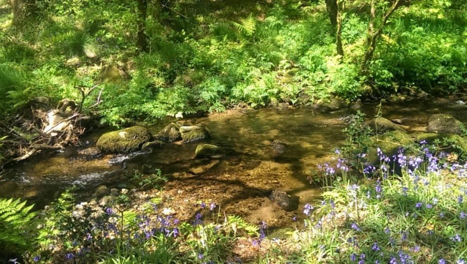 Roundhouse stream